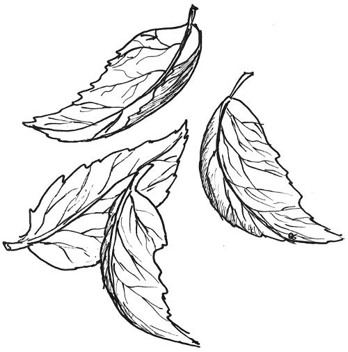illustration dkb blatt blätter wind wehen